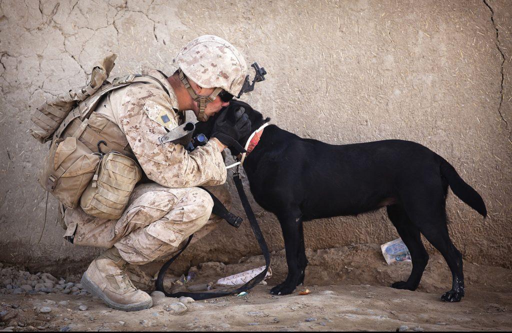 veterans, military